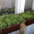 Огород на подоконнике — растениям оптимальные условия