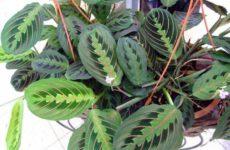 Создадим комнатным растениям благоприятные условия.