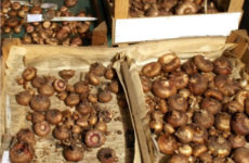 Полезные советы по уборке и хранению клубнелуковиц гладиолусов