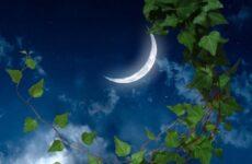 Простые секреты закономерностей влияния Луны на растения