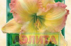 Сорта лилейников агрофирмы Аэлита