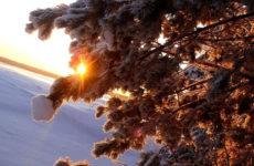 Народные приметы о погоде подсказывают дачнику — 1-10 марта