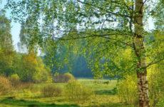 Народные приметы о погоде подсказывают дачнику – 1-10 мая