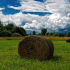 Народные приметы о погоде подсказывают дачнику – 1-10 августа