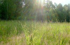 Народные приметы о погоде подсказывают дачнику – 11-20 июля