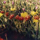 Тюльпаны – самые великолепные и роскошные весенние цветы