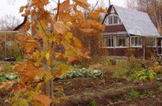 Народные приметы о погоде подсказывают дачнику – 21-31 октября