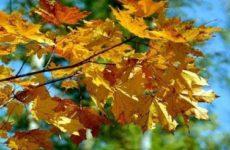 Народные приметы о погоде подсказывают дачнику – 21-30 сентября