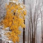 Народные приметы о погоде подсказывают дачнику – 11 – 20 ноября