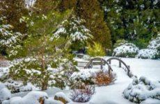 Народные приметы о погоде подсказывают дачнику — 1 – 10 декабря