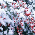 Народные приметы о погоде подсказывают дачнику – 11 – 21 декабря