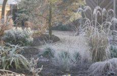 Народные приметы о погоде подсказывают дачнику – 21 – 31 января