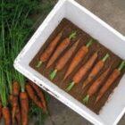 Секреты правильного хранения свежих овощей