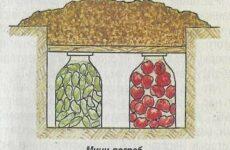 Удобные хранилища для свежих овощей на огороде и в городской квартире