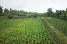 Агротехнический метод защиты растений от вредителей и болезней