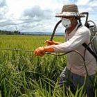 Химический метод защиты растений от вредителей и болезней