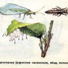 Биологический метод защиты растений от болезней и вредителей