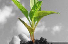 Защита сада и огорода народными средствами