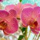 Орхидеи – общее описание