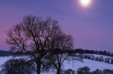 Влияние лунных дней на растения