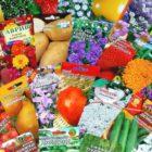 Настала пора приобретать семена овощных и цветочных культур