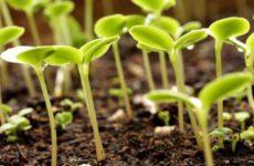Секреты правильного посева семян