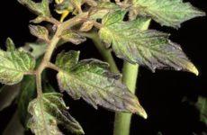 Признаки недостатка элементов питания растений