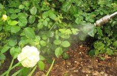Основные правила обработки растений химическими препаратами