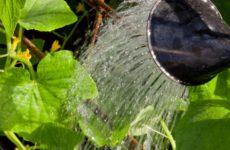 Полив огурцов и поддержание оптимальной влажности воздуха в теплице
