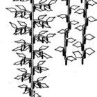 Подвязка, обрезка и формирование огурцов в теплице