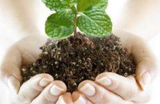 Наши ответы на вопросы читателей о защите растений