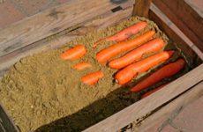 Какие способы хранения моркови в погребе выбрать