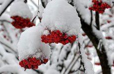 Лунный посевной календарь на декабрь 2016 года