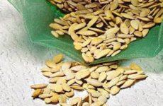 Как правильно вырастить и собрать семена огурца