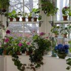 Лунный календарь комнатных растений на март 2017 года