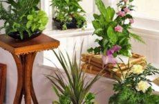 Лунный календарь комнатных растений на ноябрь 2017 года