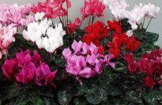 Лунный календарь комнатных растений на февраль 2018 года