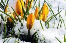 Лунный посевной календарь на март 2018 года