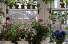 Лунный календарь комнатных растений на март 2018 года
