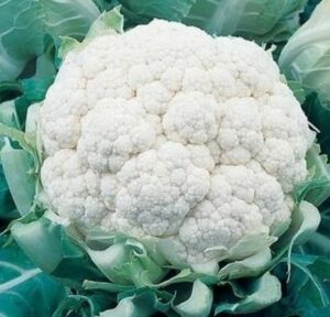 Ботаническое описание цветной капусты