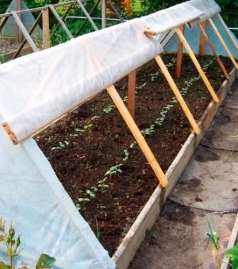 Посев огурцов в парник