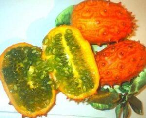 Красивый овощ кивано
