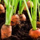 Как провести осеннюю посевную овощных культур