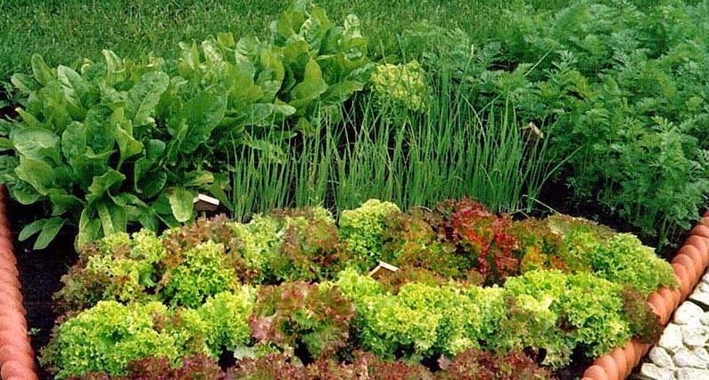Основные правила чередования посевов