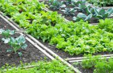 Грамотное планирование севооборота – залог высоких урожаев