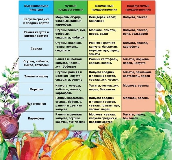 Таблица севооборота овощных культур