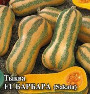Тыква Барбара