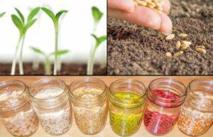 Намачивание семян