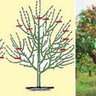 Общие правила формирования кроны и обрезки молодой яблони