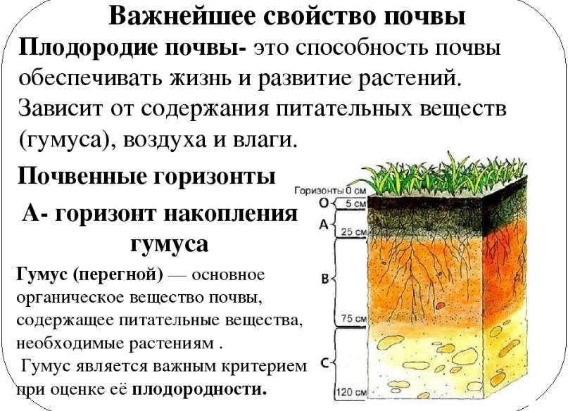 Плодородие - важнейшее свойство почвы